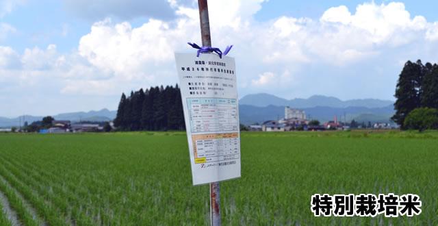 特別栽培米看板